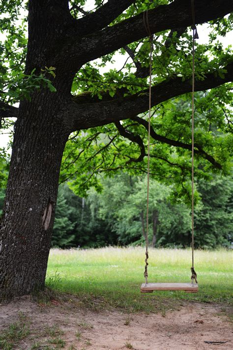 how to attach a swing to a tree branch how to choose the best tree for a tree swing