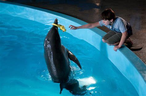 imagenes reales de winter el delfin foto la gran aventura de winter el delf 237 n 5 cinedor