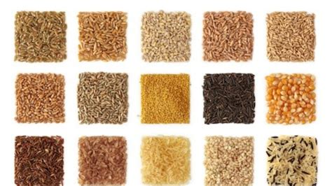 whole grains images with names gluten free tip understand whole grains gig content