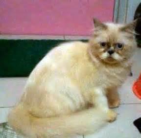 Suntik Obat Cacing Kucing kucing dijual leviana cat