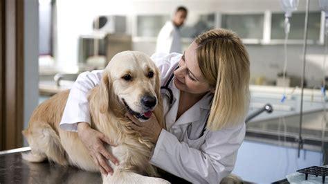 puppy vet spays neuters pender vet animal hospital fairfax chantilly va