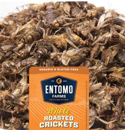 can bed bugs live in tvs entomophagy can you swallow this food trend canadian running magazine