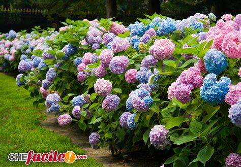 nomi di siepi da giardino il giardino dei sogni le migliori piante da siepe per il