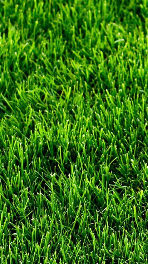 iphone wallpaper green grass green grass mosses iphone wallpaper iphoneswallpapers com