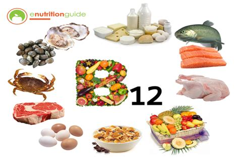 best vitamin b the best foods highest in vitamin b12 enutritionguide