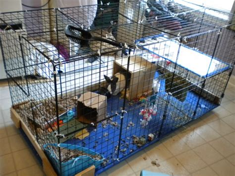 Rabbit Cage Shelf by Diy Rabbit Cage