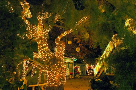 Outdoor Wedding Lights Decorations 12 Of The Wedding Trends For 2015 Weddingbuzz Au Market