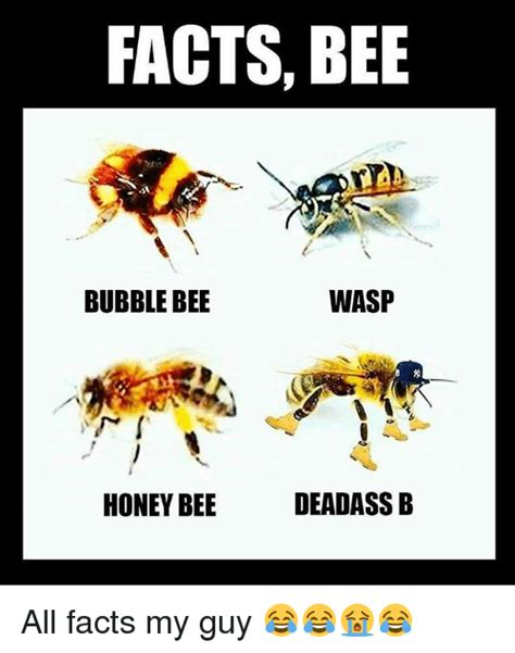 bee meme search bee wasp memes on me me