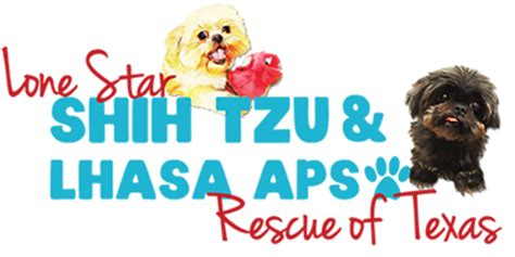 shih tzu rescue glasgow hale pet door lhasa apso rescue organizations