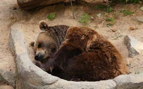 imagenes de animales que hibernan descubre por qu 233 ciertos animales hibernan en invierno