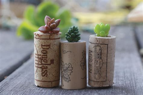 cork succulent planter diy succulent wine cork planters do it yourself projects