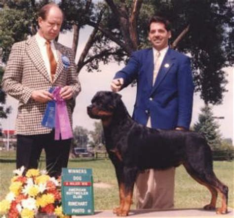 american rottweiler club the rottweiler here and abroad by fred lanting