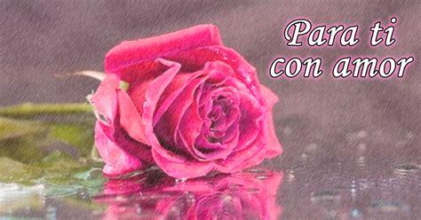 imagenes de rosas hermosas con movimiento hermosas im 225 genes de rosas reflejadas en el agua