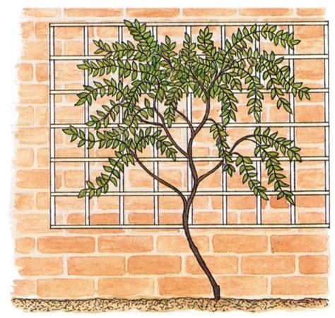 climbing fence plants garden guru support prickett ellis estate agents