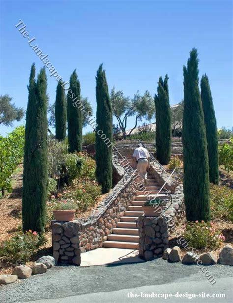 mediterranean backyard landscaping ideas mediterranean landscaping ideas italian cypress