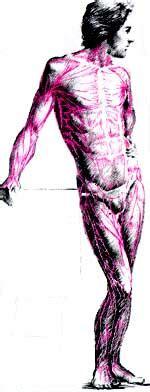anatoma para posturas de 8415053150 forzabiotec anatomia humana