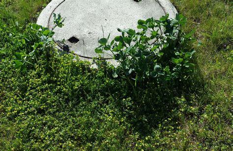 Schöner Rasen Ohne Unkraut 2066 unkrautvernichtung mit essig unkrautvernichter