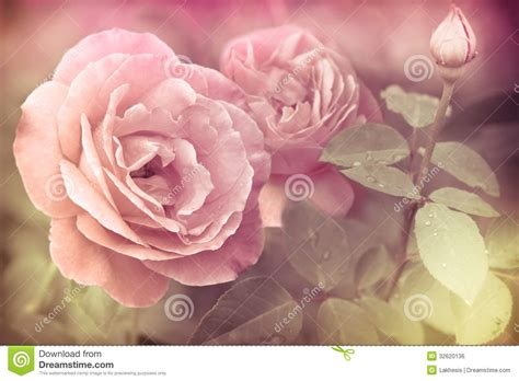 vintage style floral background with pink blooms royalty abstract romantic pink roses flowers royalty free stock
