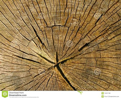 tree cross sections cross section of an old tree trunk royalty free stock