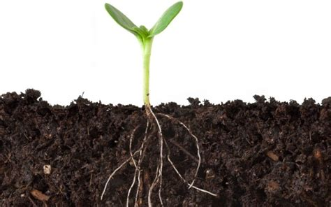 do all plants have roots wonderopolis
