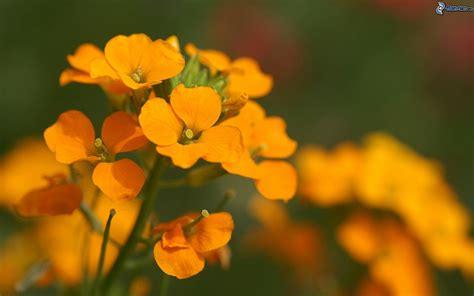 fiori arancioni fiori arancioni