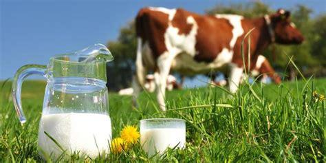 Sapi Murni Segar kandungan dan manfaat sapi