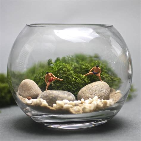 sumo mini terrarium kit by london garden trading notonthehighstreet com