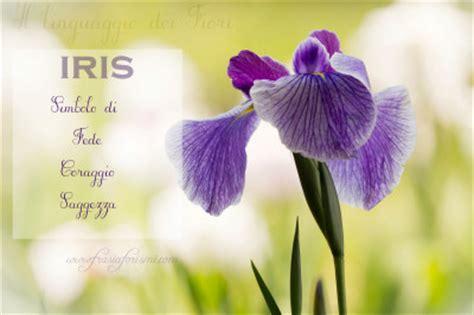 iris linguaggio dei fiori il linguaggio dei fiori