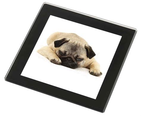 pug products gifts pug black glass coaster animal breed gift id 97127