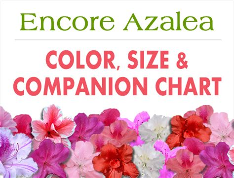 azalea colors encore azalea color size and companion chart