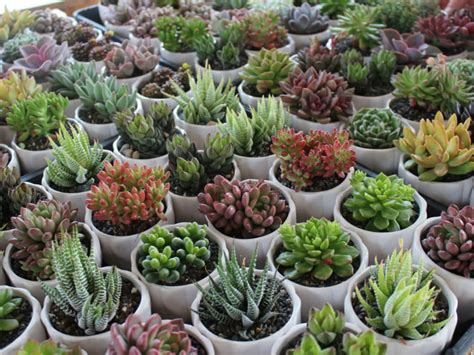 succulents that don t need light 6 reasons your succulents are dying world of succulents