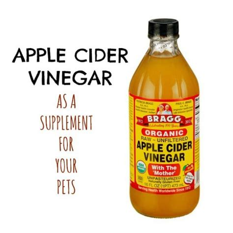 apple cider vinegar for fleas on dogs 17 best images about killing bugs on roaches ants and sprays