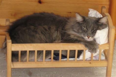 Gute Nacht Katzen Bilder by Gute Nacht Foto Bild Tiere Haustiere Katzen