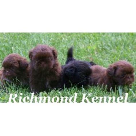 richmond kennel shih tzu richmond kennel shih tzu breeder in ohio