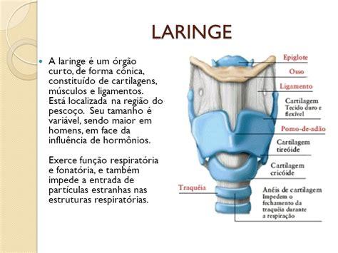 ascensã o e queda de um futebolista inspirado em casos reais portuguese edition books sistema respirat 211 ppt carregar