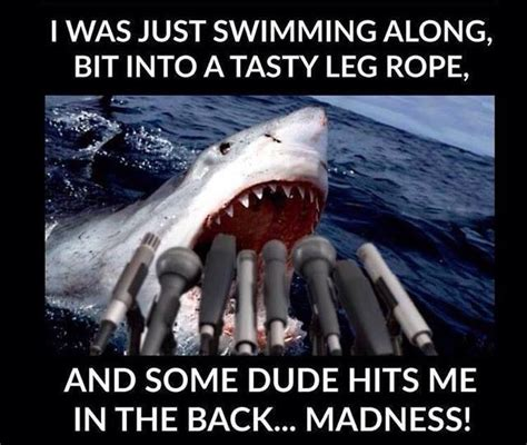 Shark Attack Meme - when the media compared a curious shark to a 1970s horror