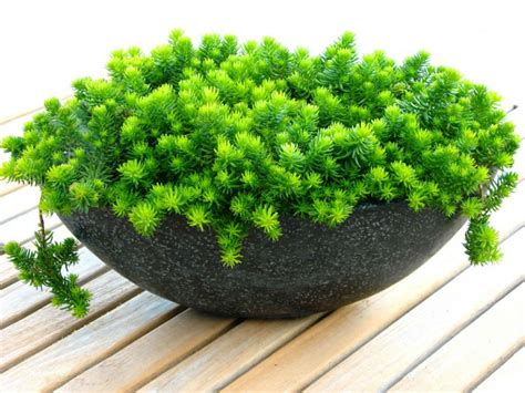 easy care 5 easy care mini succulent garden ideas world of succulents