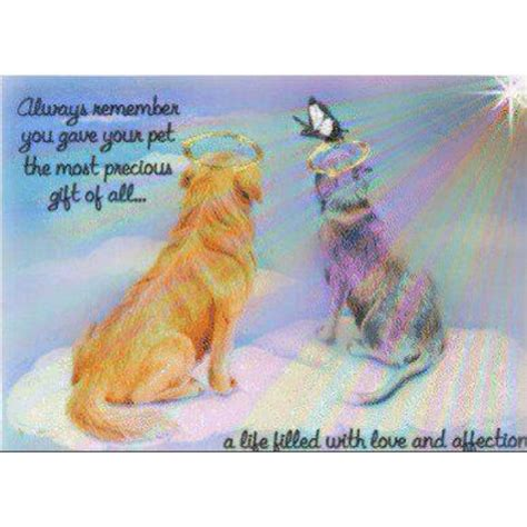 17 best images about loss of a pet quote on