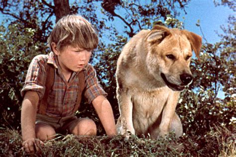themes in the film red dog old yeller actor kevin corcoran dies at 66 today s news