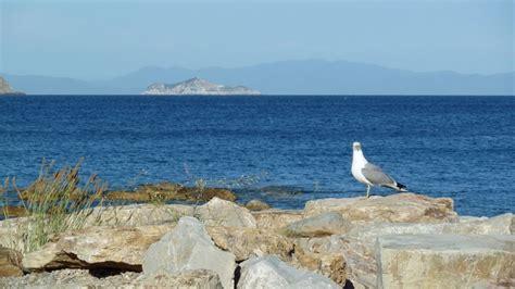 l isola gabbiano foto gabbiano al cavo rif 284 isola d elba