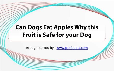 is it ok for dogs to eat apples can dogs eat apples why this fruit is safe for your
