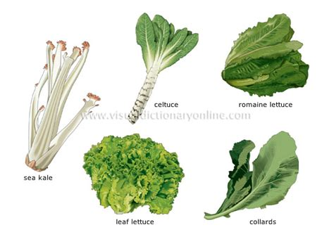 different type of leafy vegetable with name food kitchen food vegetables leaf vegetables 1 image visual dictionary
