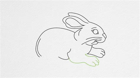 let s draw bunnies 35 step by step bunny drawings books how to draw a rabbit step by step