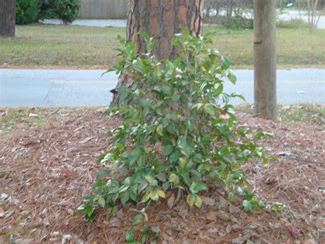 Biotic Garden Biotic Plant 2 Flickr Photo
