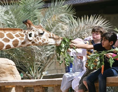 emirates zoo dubai yallabanana com family chalet stay in emirates park