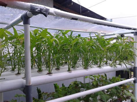 Pipa Hidroponik Surabaya budidaya tanaman hidroponik dengan plastik uv pabrik dan