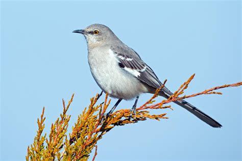 wild bird species identification