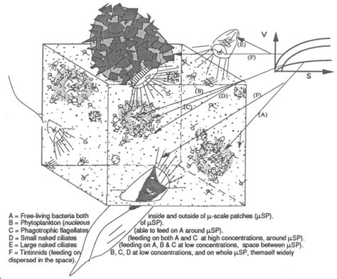 pond plans and diagrams fish tank filtration diagram engine diagram and wiring