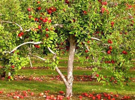 backyard apple trees 5 surprisingly easy gardening projects for spring