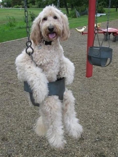 silly puppy in a swing daily picks and flicks
